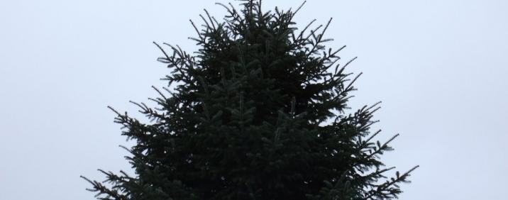 Großer Weihnachtsbaum - Großbaum aus der Region Oberschwsaben