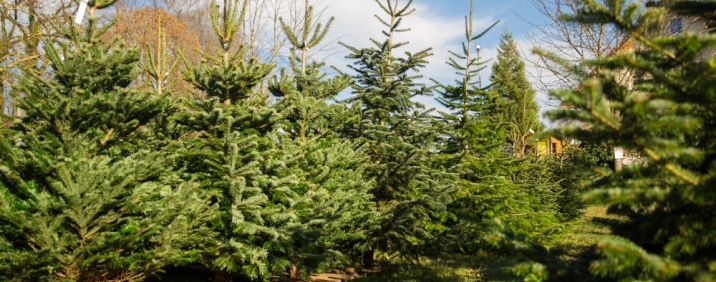 Bilder & Videos von Weihnachtsbaum Martin - Wald