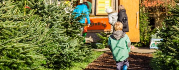 Schwäbischer Weihnachtsbaummarkt Ravensburg mit Musik