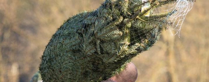 Pflegetipps Weihnachtsbaum - Tipps & Tricks von Josef Martin