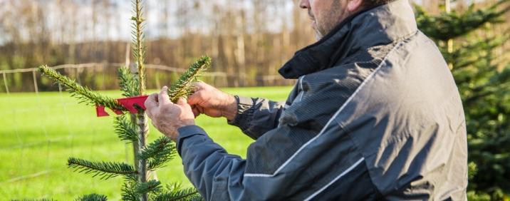 Inhaber Josef Martin bei der Arbeit im Wald