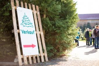 Weihnachtsbaum kaufen vom Hofgut Martin bei Ravensburg - Verkauf