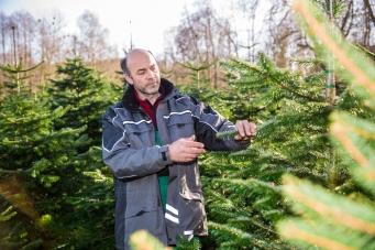 Weihnachtsbäume aus Umgebung Ravensburg- Josef Martin