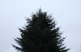 Großbäume kaufen beim Hofgut Martin, Grünkraut, Ravensburg