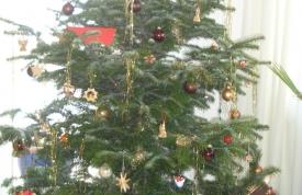 Geschmückter Christbaum / Weihnachtsbaum bei Ravensburg