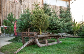 Weihnachtsbaummarkt Ravensburg - Schlitten