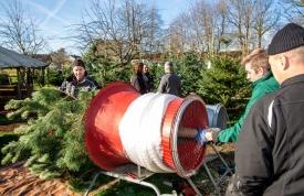 Pflegetipps Weihnachtsbaum - Einpacken