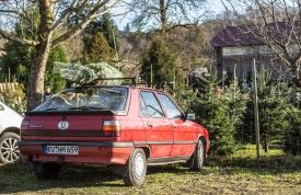 Pflegetipps Weihnachtsbaum - Transport