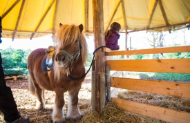 Weihnachtsbaummarkt Ravensburg - Pony
