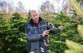 Anbau von Weihanchtsbäumen mit Experte Josef Martin