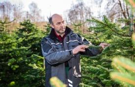 Weihnachtsbaum Pflege im Wald von Josef Martin