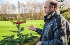 Anbau von Weihnachtsbäumen mit Experte Josef Martin
