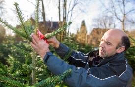 Weihnachtsbaum Martin - Inhaber Josef Martin