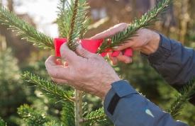 Weihnachtsbaum Martin - Qualität und Regionalität