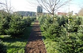 Weihnachtsbaummarkt Ravensburg - Christbäume