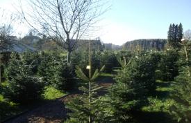 Weihnachtsbaummarkt Ravensburg - Weihnachtsbäume