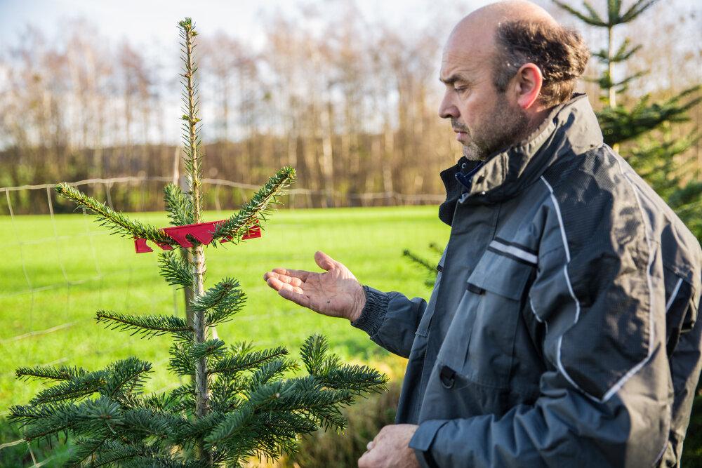 Anbau arten von weihnachtsb umen wissenswertes for Weihnachtsbaum arten